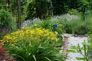 This sunny path shows the Jean Davis lavender and Zagreb coreopsis.