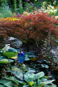 Looking west from the eastern part of the Secret Garden.  The Japanese Maple and various hostas seem happy.