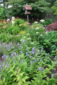 White Dome hydrangea, Rosie Returns day lily, Cool Cat catmint, various cone flowers.