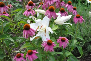 Purple Cone Flowers with Casa Blanca lily.