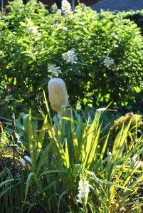 Lisianthus, the old white rose, sweet william, and hidcote lavender