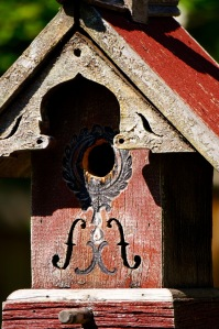 I think house sparrows finally whittled the opening to this birdhouse so they could build a nest.  Usually wrens have nested here, but with the larger opening, I suspect they will find a more secure nesting spot.  There are babies inside.  I had hoped to catch the bright yellow mouths, but they didn't cooperate.