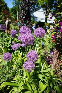 Allium!  I need allium in my garden!