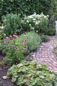 In the Secret Garden the echinaceas are finishing up. That is white phlox in the back.