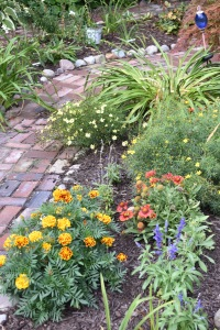 The sunny border by the garage in the Secret Garden has gone through some revisions this summer. I took out a lot of the Zagreb coreopsis and complete removed the Friesland salvia. It just got too floppy, no matter how I staked it. So, marigolds and annual salvia are filling in the bare spots. I'm hoping the blanket flower takes off