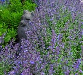 catmint615