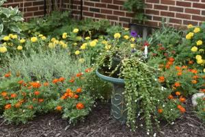 I'm always grateful for annuals.  Marigolds brighten up the little nook garden outside the sunroom.
